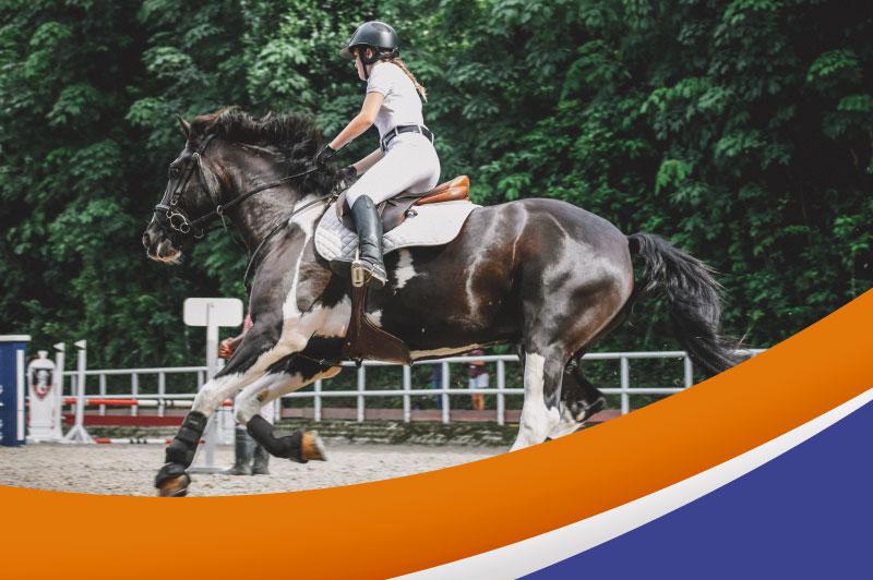 Galotec — Nutrición Súper Premium para caballos atletas