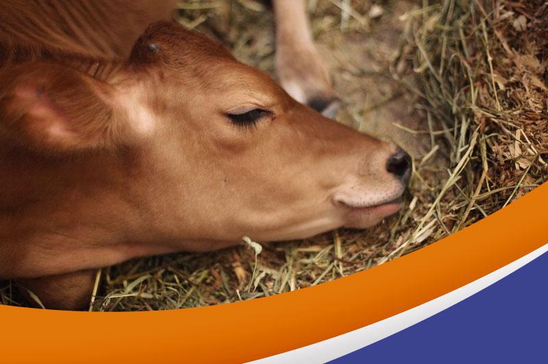 ¿Qué es el bienestar animal?