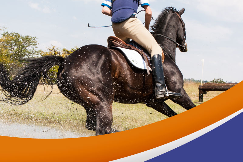 Equitonik — Nutrición Súper Premium para caballos atletas